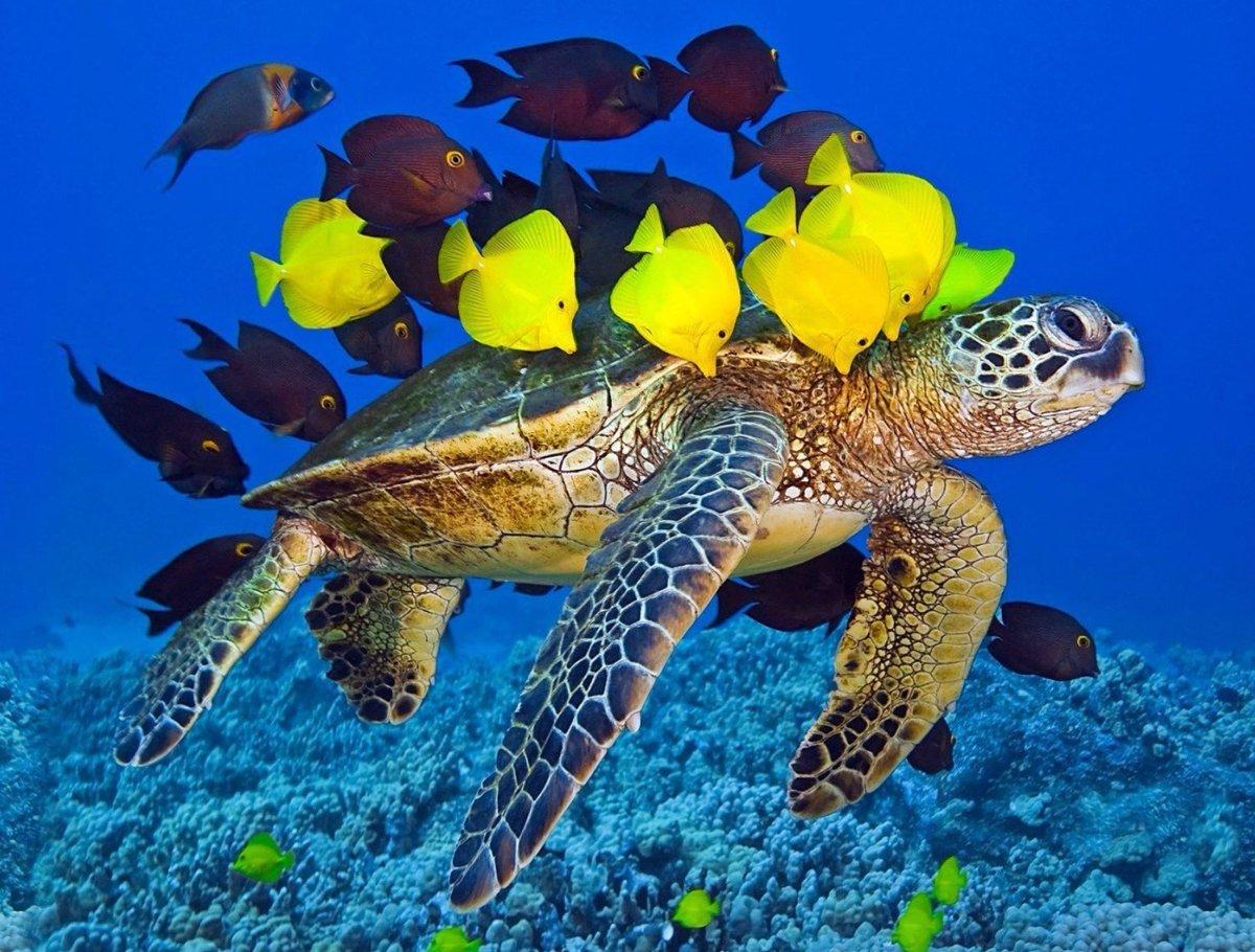 sweetrhythms-tweet-sea-turtle-with-fish