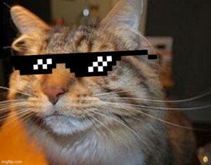 suspicious_cat_sunglasses.jpg