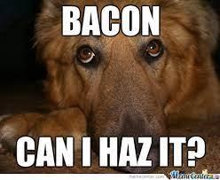 Bacon Can I haz it.jpg